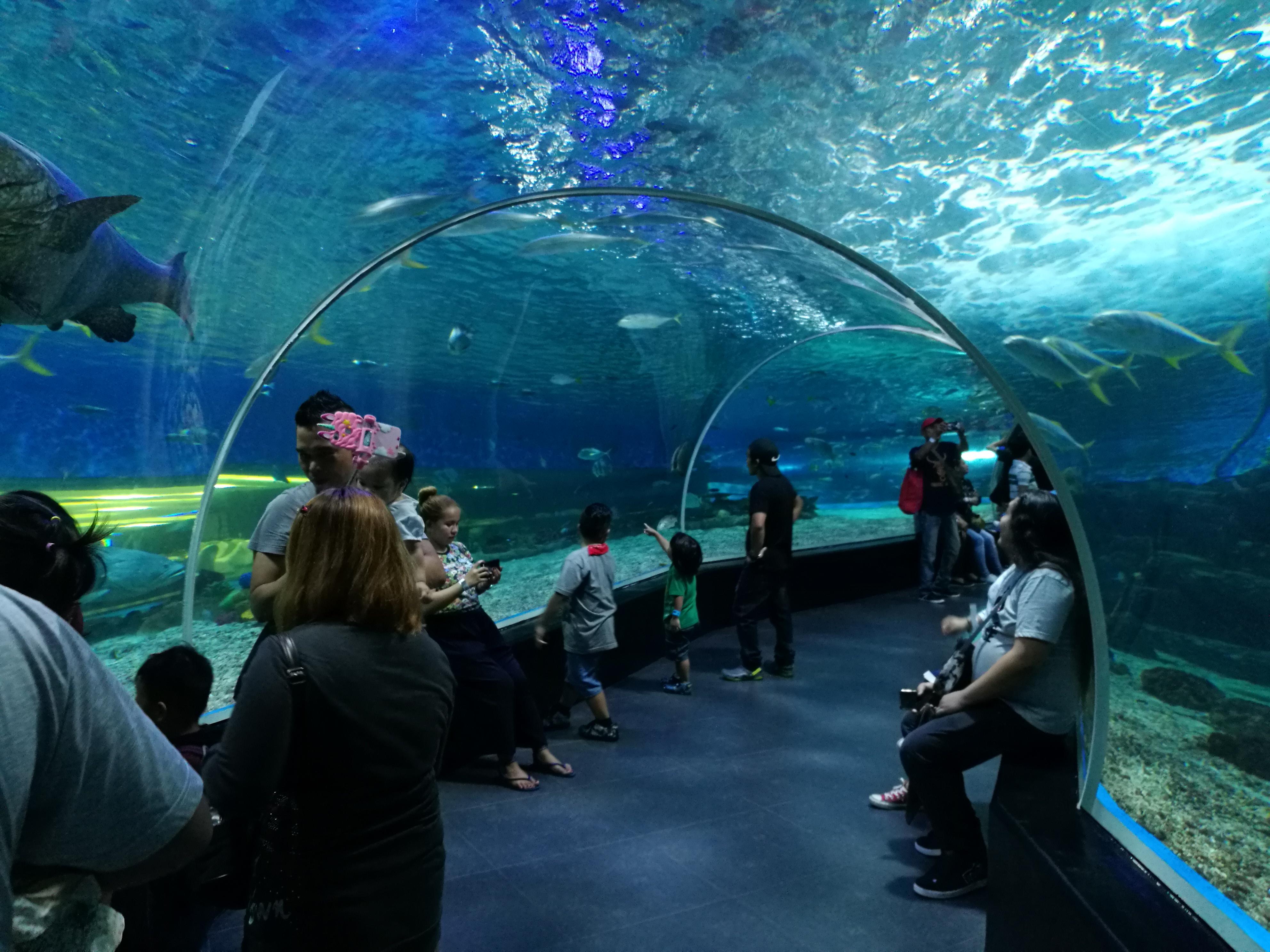 フィリピンの水族館「マニラ・オーシャンパーク」は日本の水族館と比べてどうなのか?